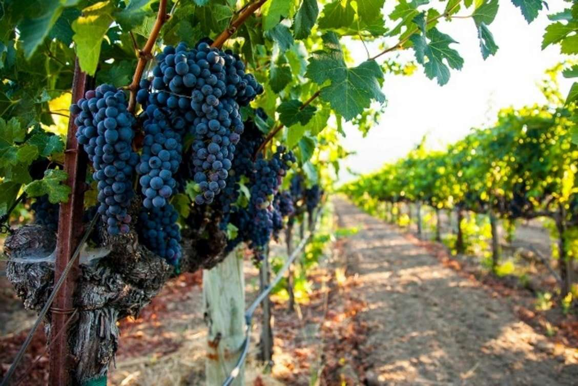 comprar-viñedos-demanda-aumenta